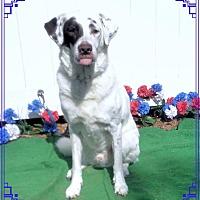 Adopt A Pet :: HUEY - Marietta, GA