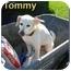 Photo 1 - Beagle Mix Dog for adoption in Aldie, Virginia - Tommy, Sr.