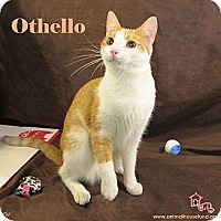 Adopt A Pet :: Othello - St Louis, MO