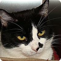 Adopt A Pet :: Bootsie - Canoga Park, CA