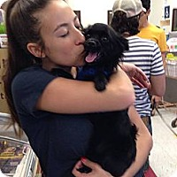 Adopt A Pet :: Rembrandt - N Hollywood, CA