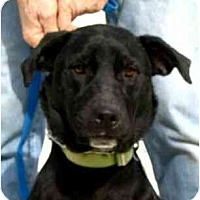 Adopt A Pet :: Lola - Kingwood, TX