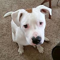 Adopt A Pet :: Jughead - Detroit, MI