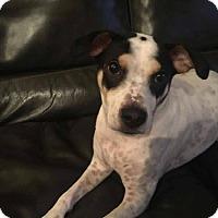 Adopt A Pet :: Abel - Morgantown, WV