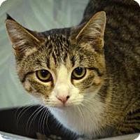 Adopt A Pet :: Terminator - Fort Smith, AR