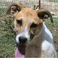 Australian Cattle Dog Mix Dog for adoption in Tyler, Texas - AA-Parker