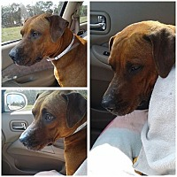 Adopt A Pet :: DELILAH - Hollywood, FL