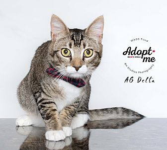 Adopt A Pet :: AG Delta  - Houston, TX