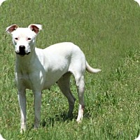 Adopt A Pet :: Oddball - Lufkin, TX