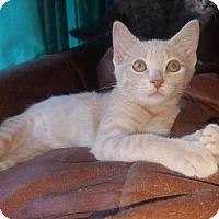 Adopt A Pet :: Petal - Valley Park, MO