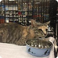 Adopt A Pet :: Celia - Columbia, SC