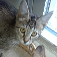 Adopt A Pet :: Catti LaBelle - Highland, IN
