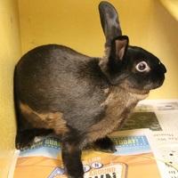 Adopt A Pet :: *TIANA - Las Vegas, NV