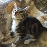 Adopt A Pet :: Collette - Lodi, CA