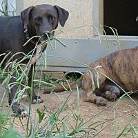 Adopt A Pet :: Lucy - Kingston, TN