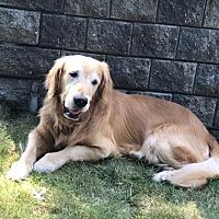 Adopt A Pet :: Mate - New Canaan, CT