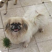Adopt A Pet :: Bianca - N. Fort Myers, FL