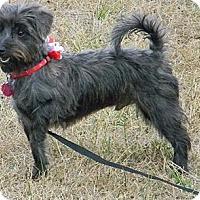 Adopt A Pet :: HARRY - cameron, MO