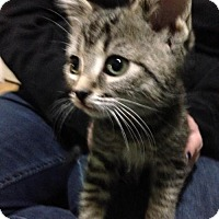 Adopt A Pet :: Loki - Hamilton, ON