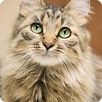 Adopt A Pet :: Mariah - Chicago, IL