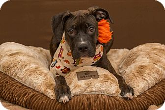 Terrier (Unknown Type, Medium) Mix Dog for adoption in Flint, Michigan - Cupcake - Adopted