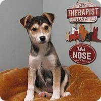Adopt A Pet :: Bean - South Dennis, MA