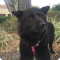Adopt A Pet :: Cindy - Gainesville, FL