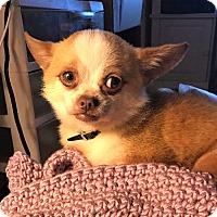 Adopt A Pet :: Zeus - Durham, NC