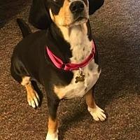 Adopt A Pet :: Greenley - DeSoto, IA