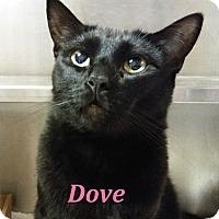 Adopt A Pet :: Dove - El Cajon, CA