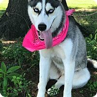 Adopt A Pet :: Twyla - Muldrow, OK