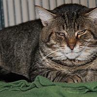 Adopt A Pet :: Odin (Neutered) - Update - Marietta, OH