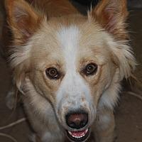 Adopt A Pet :: Lucky - Surrey, BC