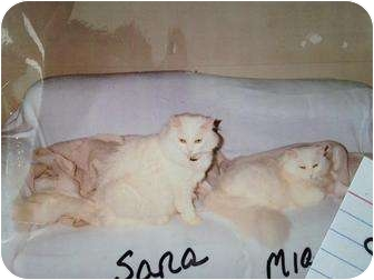 Turkish Angora Cat for adoption in Mobile, Alabama - Sara