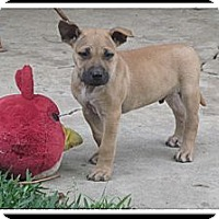 Adopt A Pet :: Kai - Santa Monica, CA
