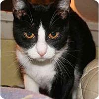 Adopt A Pet :: Danielle - Jenkintown, PA