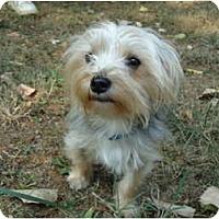Adopt A Pet :: Benson - Plainfield, CT