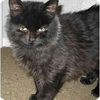 Adopt A Pet :: Harriet - Davis, CA