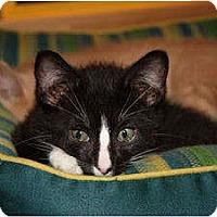 Adopt A Pet :: Pickles (LE) - Little Falls, NJ
