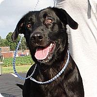 Adopt A Pet :: Princess - Lewisville, IN