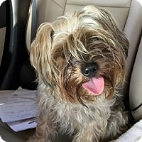 Adopt A Pet :: Jack Jack - West Palm Beach, FL