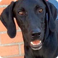 Adopt A Pet :: HENDRIX (video) - Los Angeles, CA