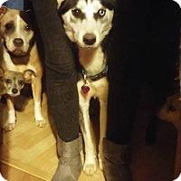Adopt A Pet :: Maxine - Houston, TX