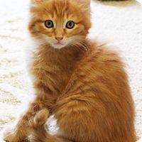 Adopt A Pet :: Dockweiler - North Highlands, CA