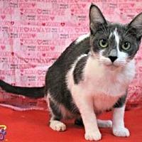 Adopt A Pet :: Juniper - Sebastian, FL