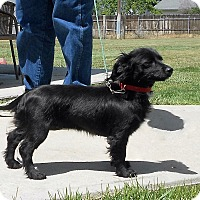 Adopt A Pet :: POPPY - Nampa, ID