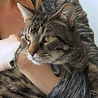 Adopt A Pet :: Sammy - Santa Paula, CA