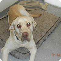 Adopt A Pet :: SAMMY - Sandusky, OH