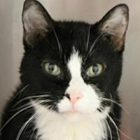 Adopt A Pet :: Meeko - Hilton Head, SC