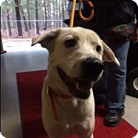 Adopt A Pet :: Buddy - Muskegon, MI